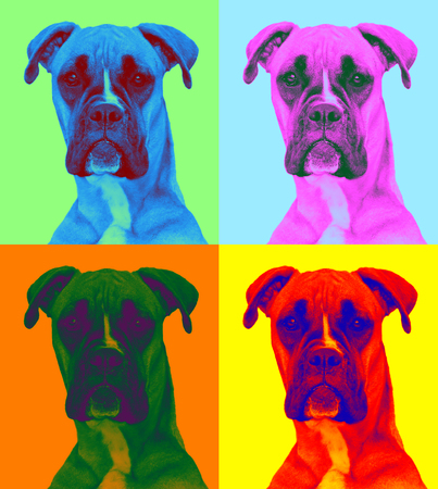 attentive dog in pop-art style (three bright colors)