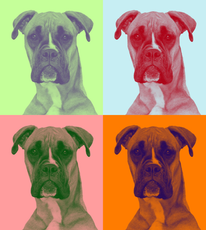 attentive dog in pop-art syle (two soft colors)