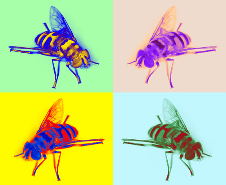 hoverfly in pop art style