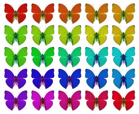 Butterflies showing concept of colors, crowd, difference, gradient, repetition