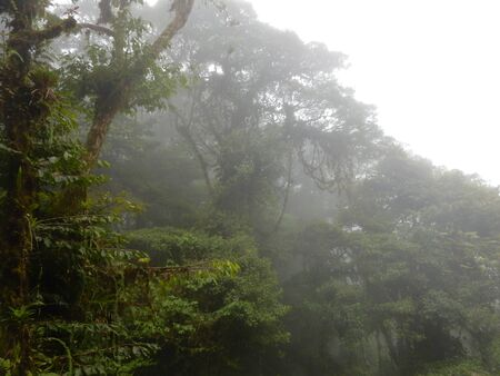 Canopy of a cloud forest in Monteverde, Costa Rica