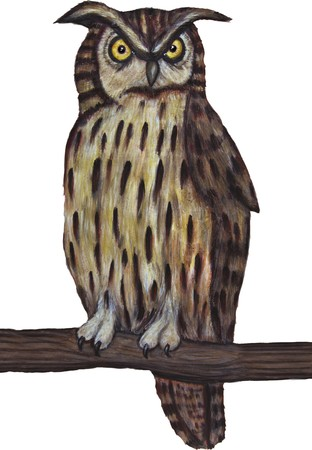 Naturalistic illustration. Long-eared owl sitting on a branch on a white background. illustration