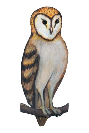 old barn: barn owl illustration, realist style over white Stock Photo