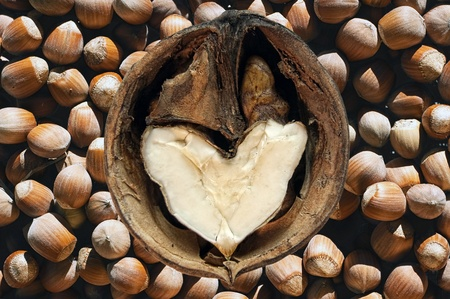 heart shaped walnut over a hazelnut background Stock Photo - 9440666