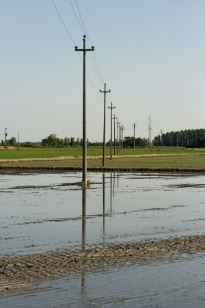 High voltage power lines  in a rice crop