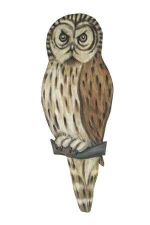 tawny owl: illustration of a tawny owl isolated on white background.