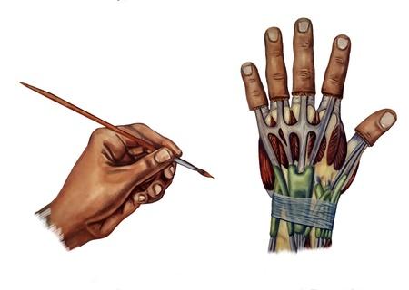 medicina ilustracion: mano ilustraci�n m�dica sobre el s�ndrome del t�nel carpiano Foto de archivo
