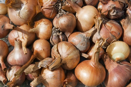 Fresh raw organic onions background, just harvested Stock Photo - 10548668