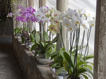 medieval italian cloister with flower arrangement