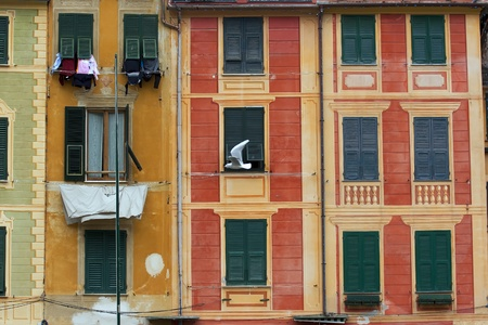 white dove flying over colorful old  buildings in Portofino, Italy photo