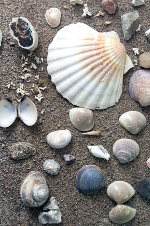 Sea Life, shells over a sand background  photo