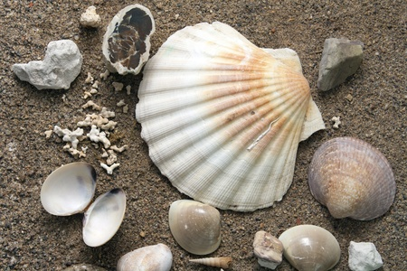 Sea shells over a sand background Stock Photo - 11798952
