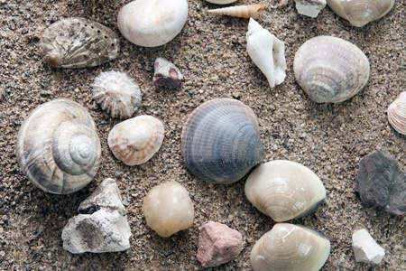 Sea shells and snail shell over a sand background  photo