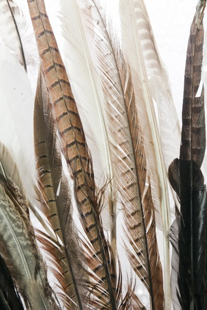 Close Up of Natural Feathers from various Birds Stock Photo