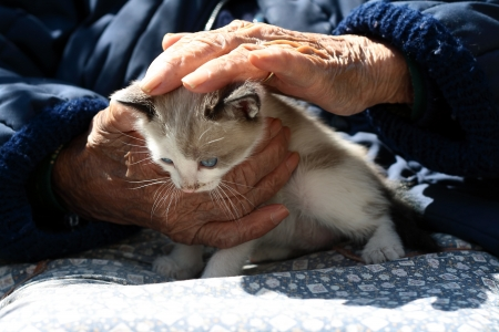 wrinkled hands of a senior Woman caressing a kitten Stock Photo