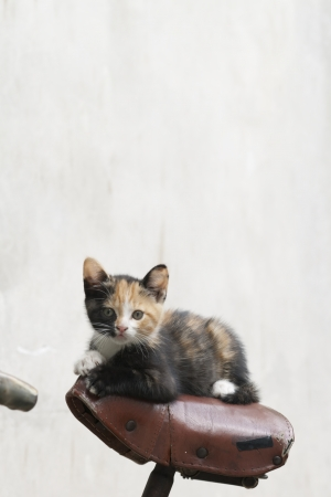 young cat sitting on a bycicle seat