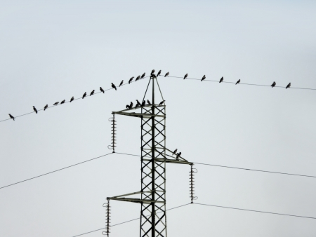 Many crow birds waiting on the electric wires photo