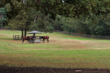 outdoor shot of horses and manger in a park