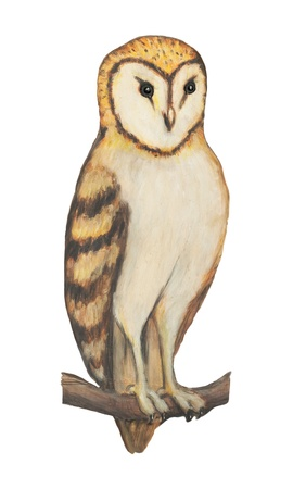 strigiformes: Barn Owl illustration over white with clipping path Stock Photo