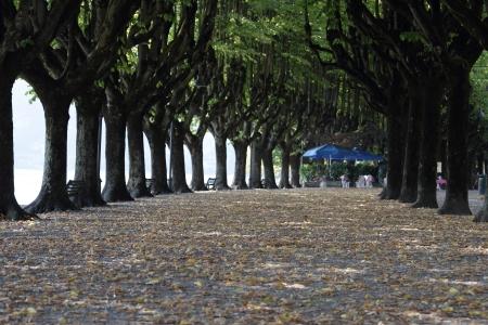 treelined: tree-lined avenue in autumn season