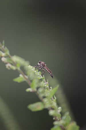 gad: Insect gad horse fly in the wild