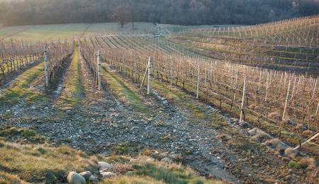 vineyards at winter time in Piedmont, Italy Stock Photo