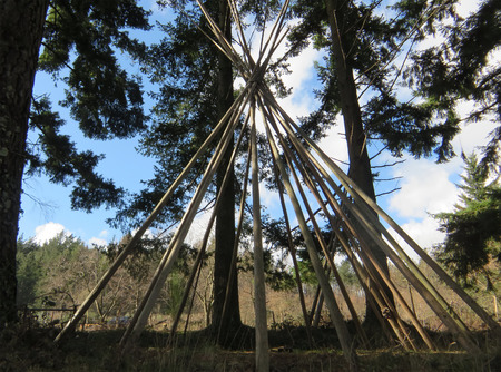 tepee: Indian tepee in construction under pine trees