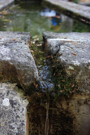 sediento: abejas sedientos de agua potable en �poca estival Foto de archivo