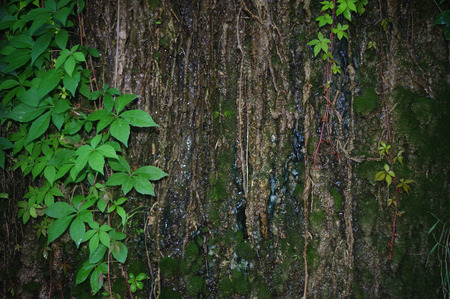 mossy: wet mossy rocks  in the rain forest Stock Photo