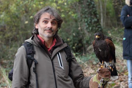falconry: Harriss hawk, bird of prey falconry
