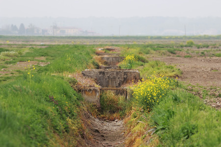 piedmont: Rice crops sewer in Novara province, Piedmont, Italy