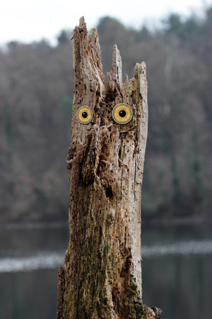 owl eyed tree of a fairly tale Stock Photo