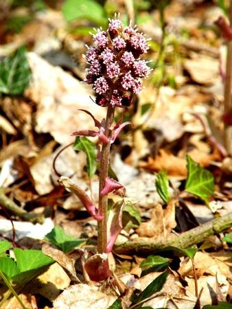 wild flower photo