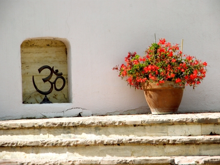 ohm and flowers photo