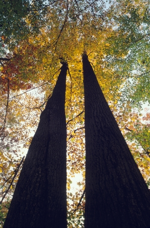 Trees in Fall Color