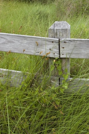 Fence with Overgrown Grass Stock Photo