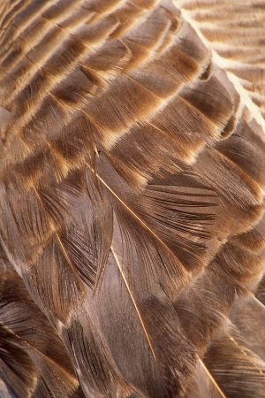 Feathers Close up