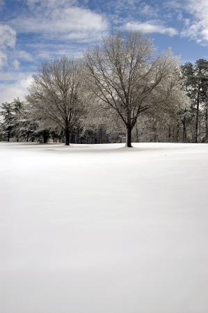 Pair of trees in a clean snowy field Stock Photo - 16710874
