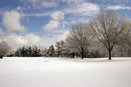A clean snowy field with trees Stock Photo - 16710880
