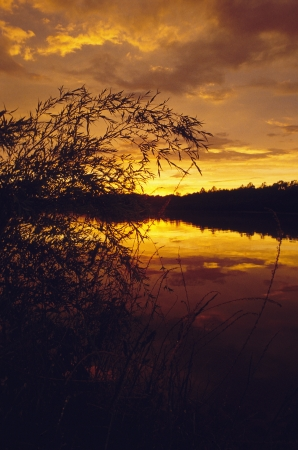 Sunset over pond with weeds in foreground Stock Photo - 16710863