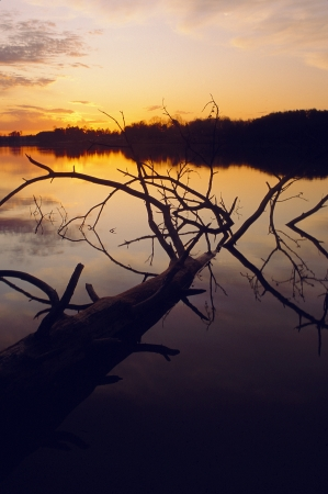 Sunset over lake with fallen tree Stock Photo - 16710862
