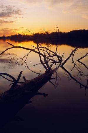 Zonsondergang over meer met omgevallen boom