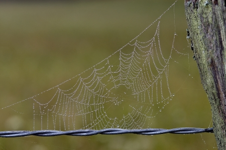Barbed wire fence with spider web filled with dew droplets Stock Photo - 17008459