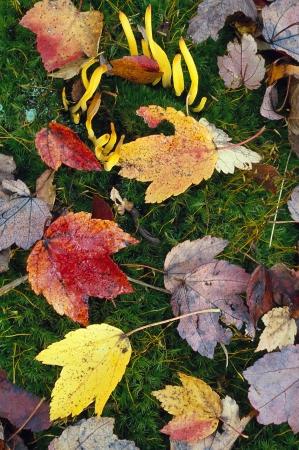Autumn leaves met banaan schimmel