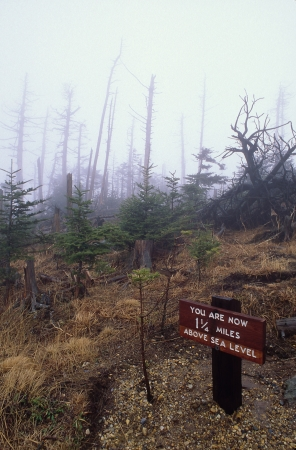 treed: Dead Trees on Mountain Top