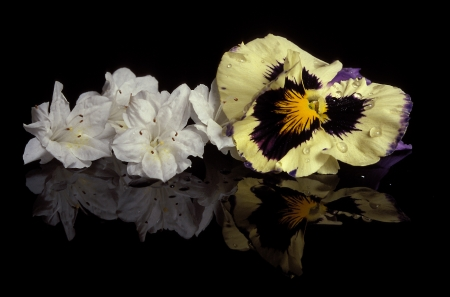 reflect: A flower still life reflecting on a black base