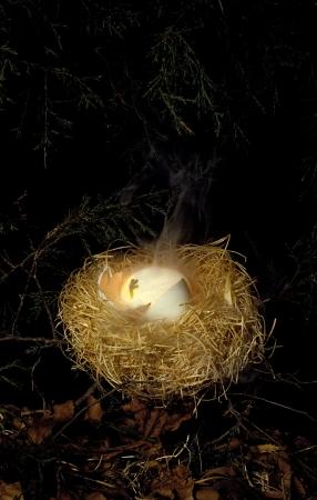 Een nest van een rare buitenaardse wezen met een broedei gloeien