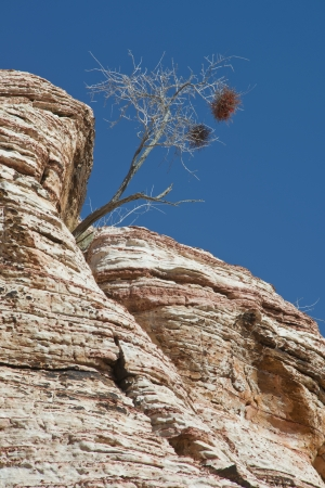 A lone tree growing in solid rock Stock Photo