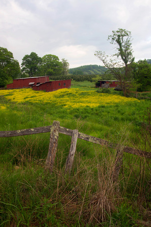 A pair of red sheds in a field of buttercup flowers