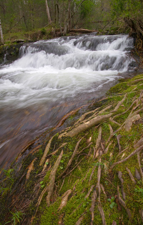 A small waterfall rushing through moss covered tree roots Stock Photo